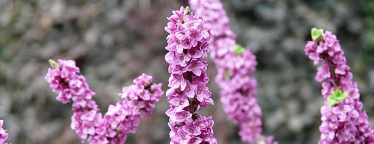 Die hübsche Pflanze ist für Kinder leider giftig
