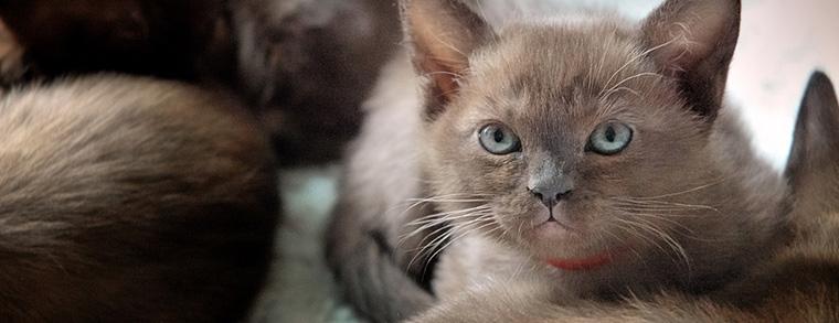 Der Charm der kleinen Kätzchen wickelt nicht nur Kinder um den Finger