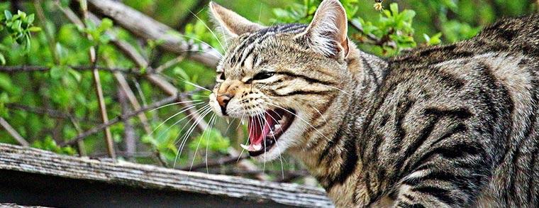 Katzen zeigen es, wenn sie ihre Ruhe brauchenj