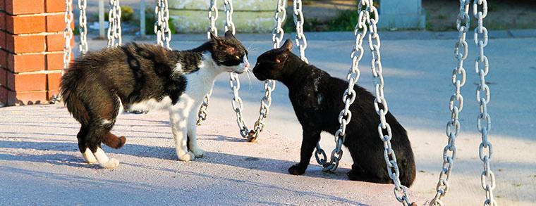 Katzen sind beliebte Haustiere für Kinder