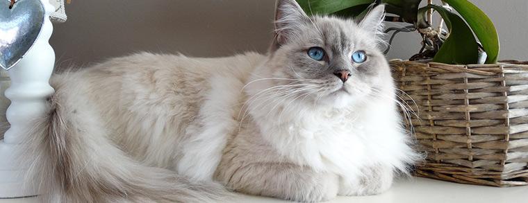 Die blauen Augen verzaubern Jung und Alt