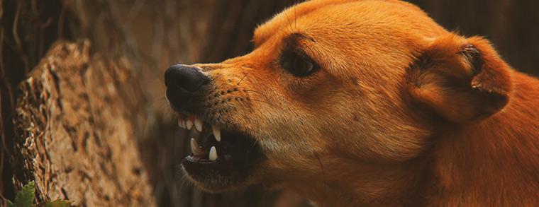 Zähnefletschender Hund