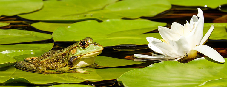 Ein Teich muss immer kindersicher sein.
