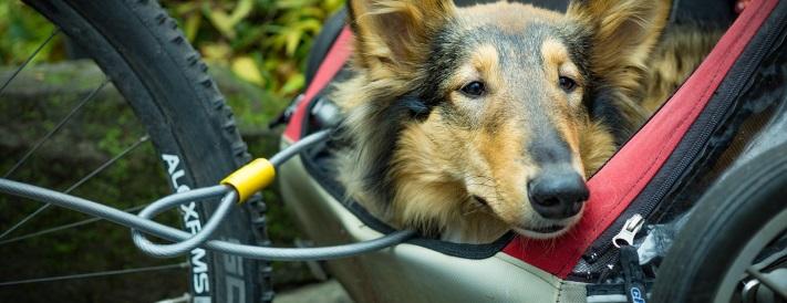 Hund in einem Fahrradanhänger