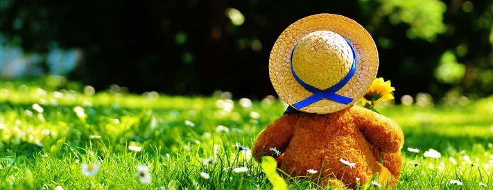 Teddy auf einer sonnigen Wiese mit Sonnenhut