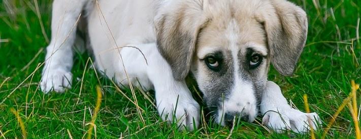 Würmer führen bei Hunden zu Müdigkeit