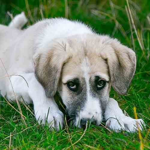 Schädlinge bei Haustieren – Was tun mit Baby und Kind?
